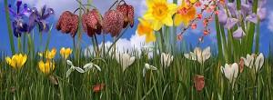 spring-scene-panoramic